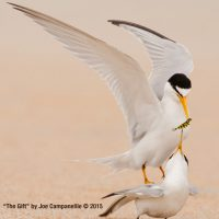 World Travelers: Unlocking the Mystery of Bird Migration