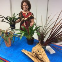 Brown Bag Lunch Program - Master Gardener Dottie Hudson presents Fall/Holiday Floral Arrangments
