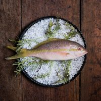 "Farm-to-Fork Chef Series: ""Captain's Catch"""