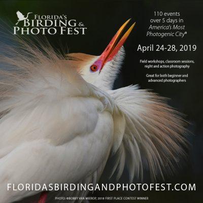 Florida's Birding & Photo Fest