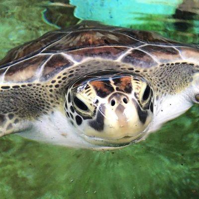Let's Talk Turtle