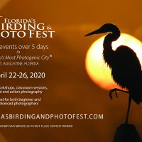 Florida's Birding & Photo Fest CANCELED