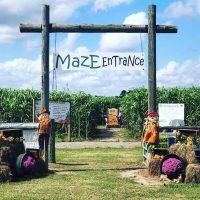 Sykes Family Farms Crop Maze