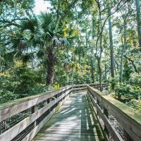 Walk Through Time: 200 Years of History at Canopy Shores Park