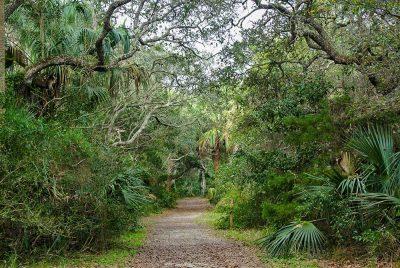 904 Naturalist Workshop: Exploring the Life of Pla...