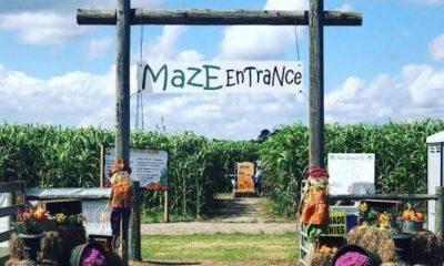 Corn Maze at Sykes Family Farm